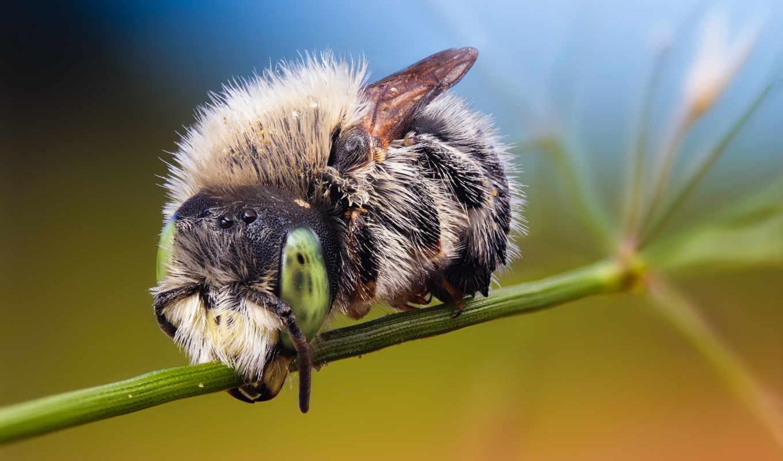 bees, животные, насекомые, шмель, шмели, осы,