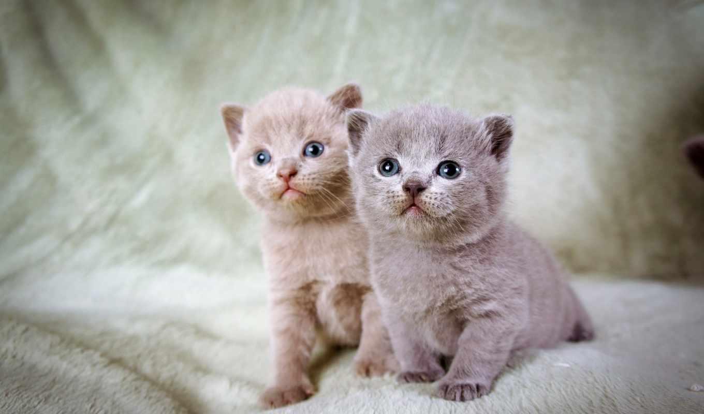 котята, просмотреть, сидеть, подоконник, малыши,