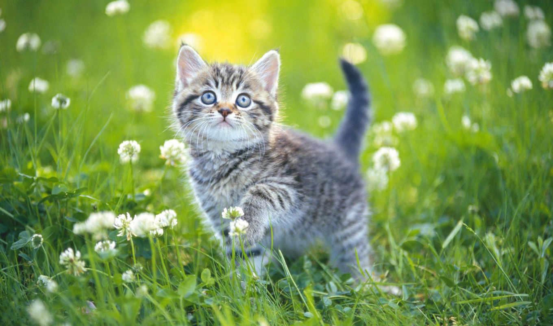 котенок, preview, вышивки, цветы, трава, марк, range, нитей, схемы, summer,