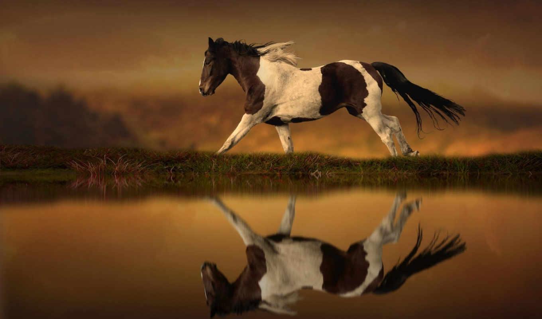 лошадь, лошади, воде, коллекция, отражение, ноя, fone, пятнистая,