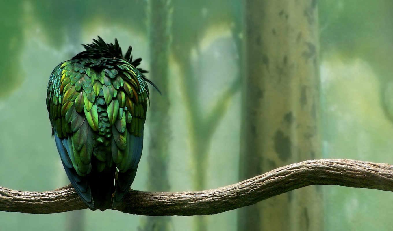 birds, птица, птицы, милые, зелёный, попугай, zhivotnye, branch,