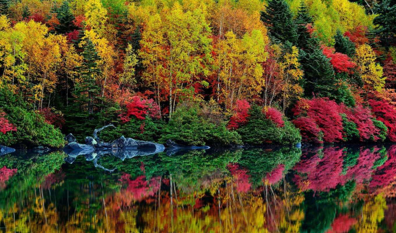 осень, water, природа, вышивки, река, лес, схемы, отражение, красиво, trees,
