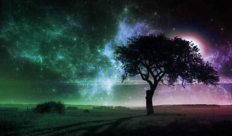 дерево, поле, одинокое, растущее, fone, ночь, разных, landscape, небе,