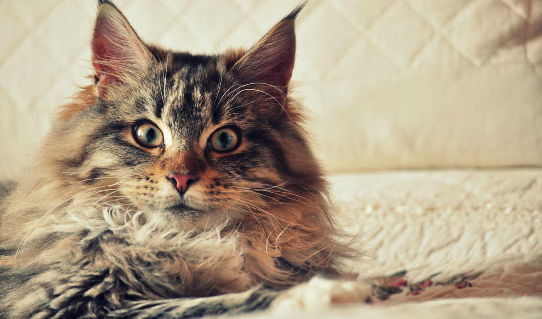 коты, приколы, кошек, собаки, смешные, video, котами, породы, кот, кошки, могут,