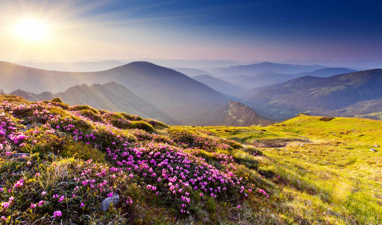 горы, цветы, солнце, азалия, трава, камни, холмы, лучи, der, ins, grüne, stadt, купон, ist, man,