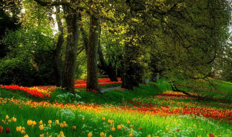 цветы, деревья, трава, природа, тюльпаны, весна, парк, аллея, поляна, картинка, картинку, кнопкой, мыши, правой, сады,