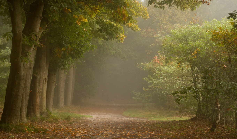 природа, осень, тропинка, лес