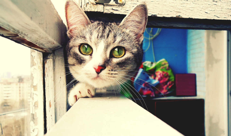 глаза, балкон, картинка, окно, картинку, cat,