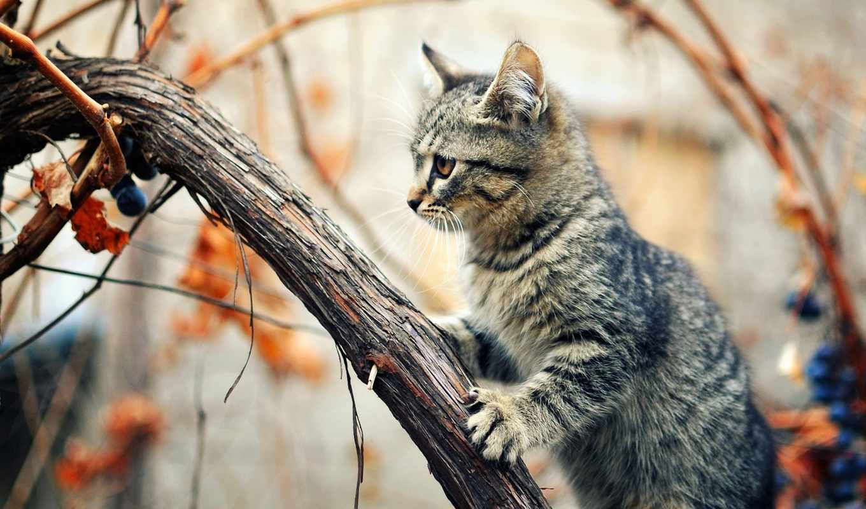 кот, осень, дерево, liana, сидя, виноград,