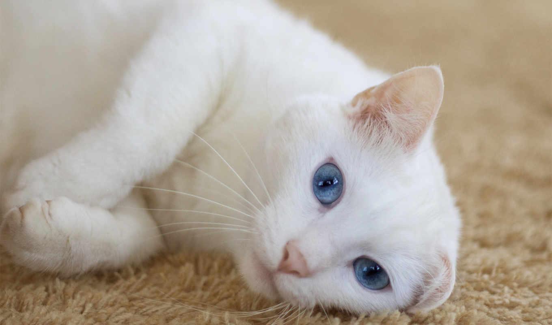 голубыми, глазами, сайте, красивые, разных, разрешениях,