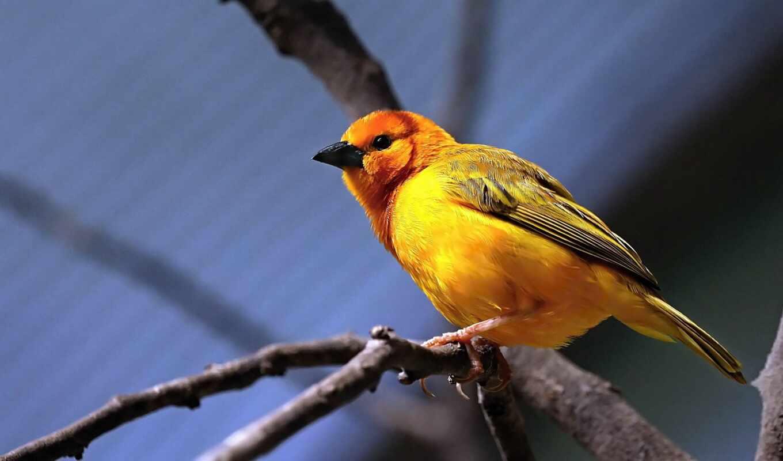 птица, праздник, сегодня, апрель, miro, ветка, den, желтый, животное, дерево, pero