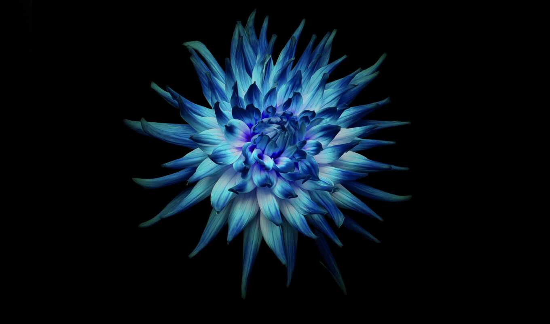 mate, blue, lite, цветы, сток, black, dark, darkness