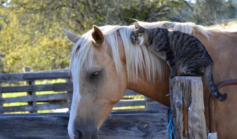 кошка, дружба, конь,