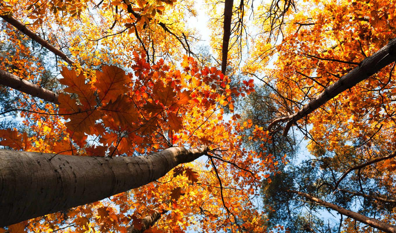 осень, природа, деревья, пейзаж, листья, небо, лес,