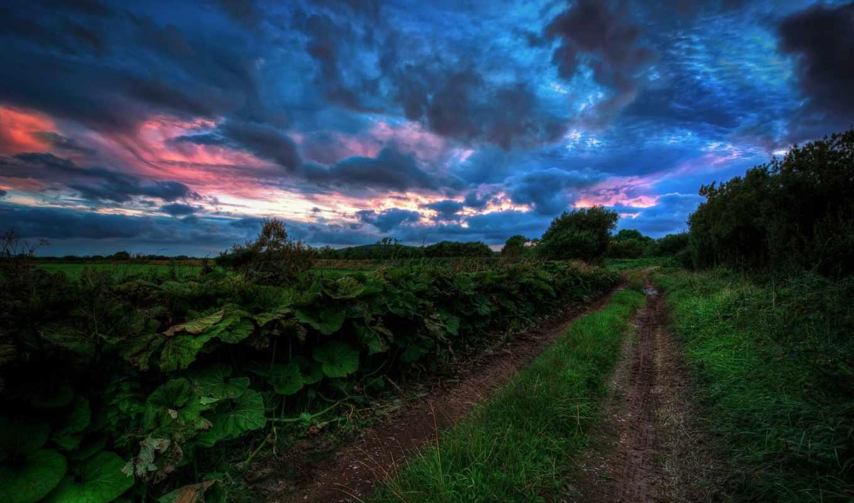дорога, деревья, небо, summer,