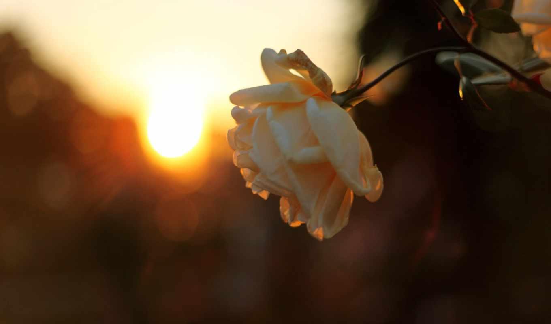 sun, небо, лучи, закат, свет,