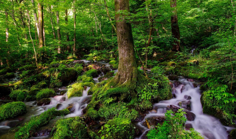 лес, ручей, desktop, фон, fantastic,