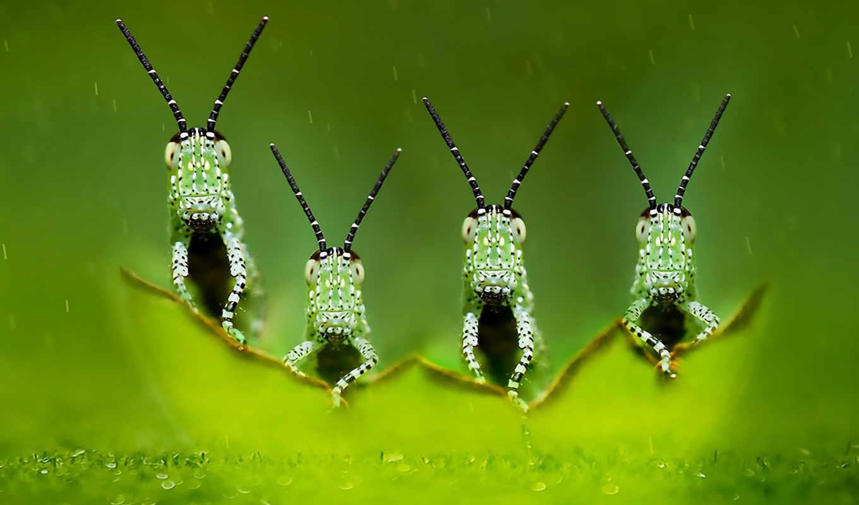 насекомое,, darmowe, , free, widescreen, квартет,