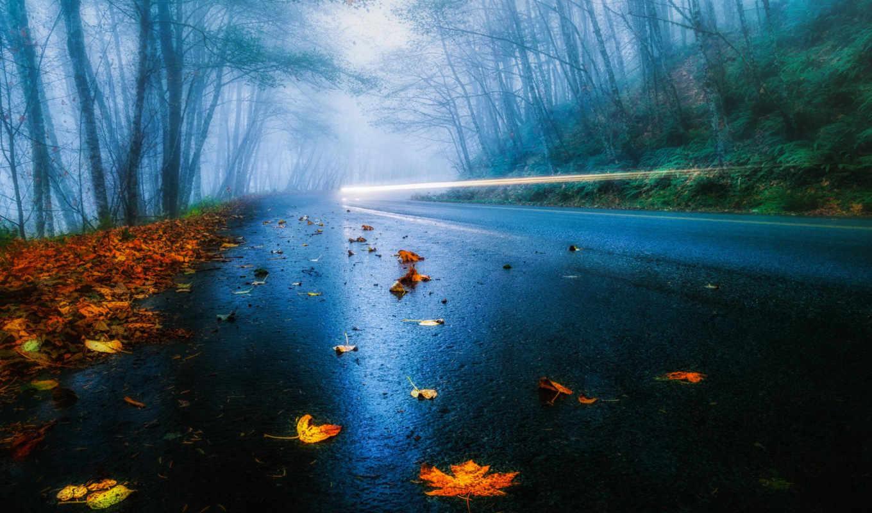 осень, деревя, лес, листья, дорога, mist, дождь, usa,