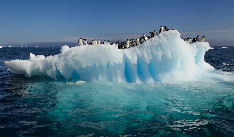 антарктида, пингвины, океан, льдина, антарктиду, круиз, антарктиде, факты, voda,