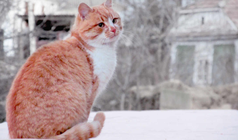 red, кот, sur, animal, картинка, zhivotnye,