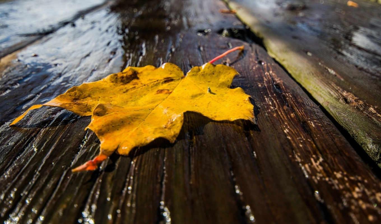 фотографии, макро, лист, осень, рисунки, популярные,