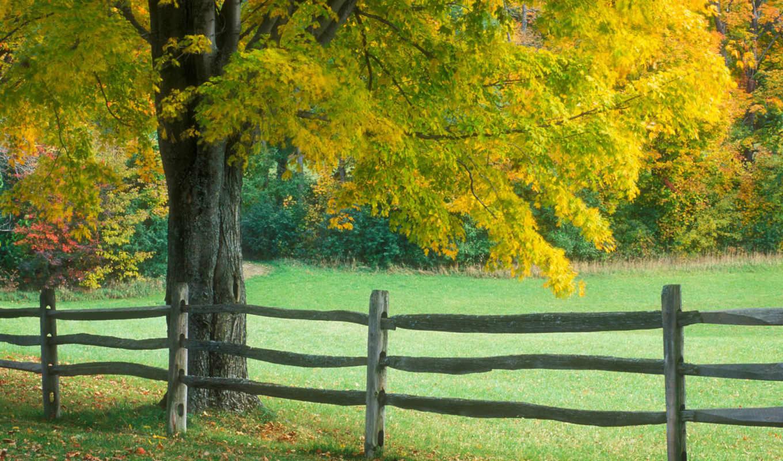 красивых, девушек, подборка, ранняя, осень, красавица, природа, тегом,
