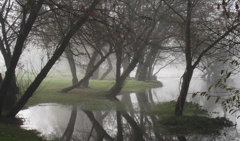 water, деревя, отражение, туман, море, природа,