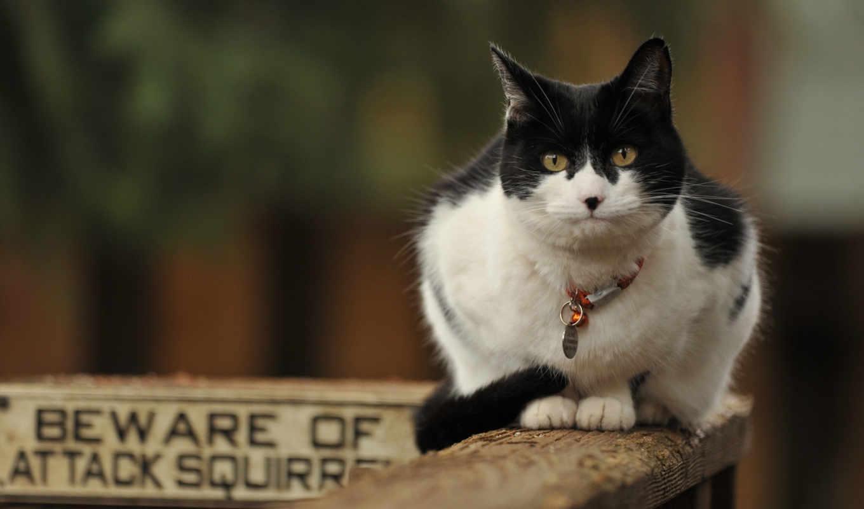 зверский, positive, главная, кот,