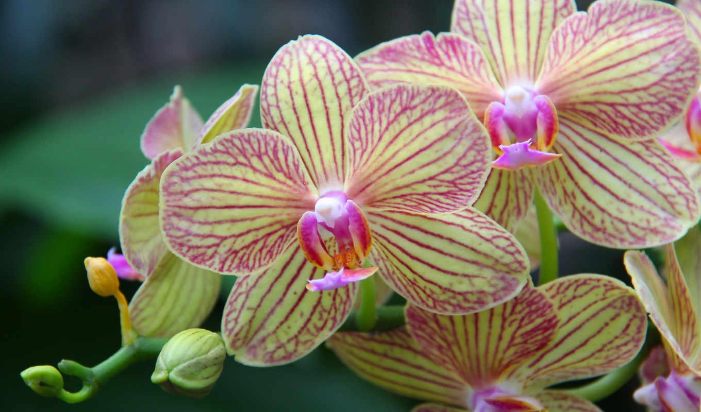 цветы, дивные, кб, бе, сообщения, цитата, цитатник, орхидея, community, свой,