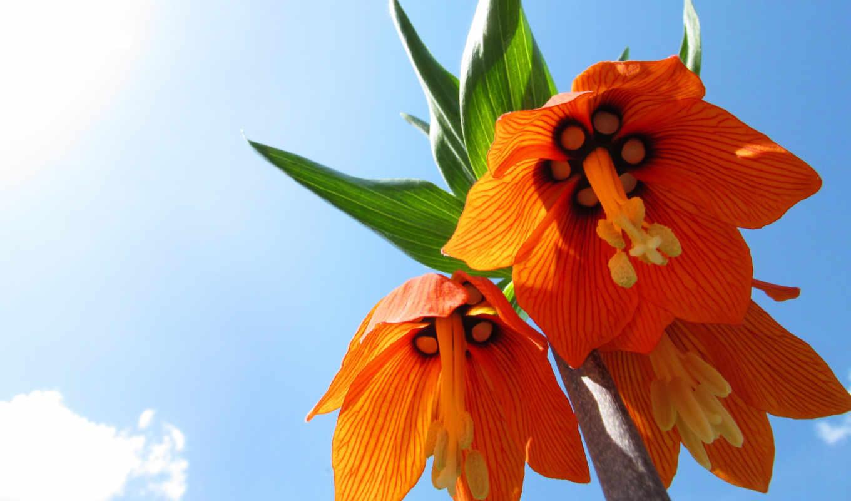 цветы, красочные, color, фотографий, цветов, видов, разнообразных, сборнике,
