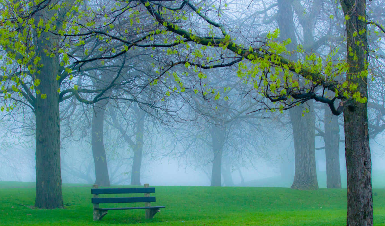 парк, трава, туман, ветки, природа, весна,