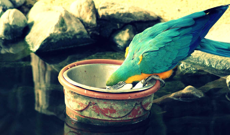 birds, water, animals, parrots,
