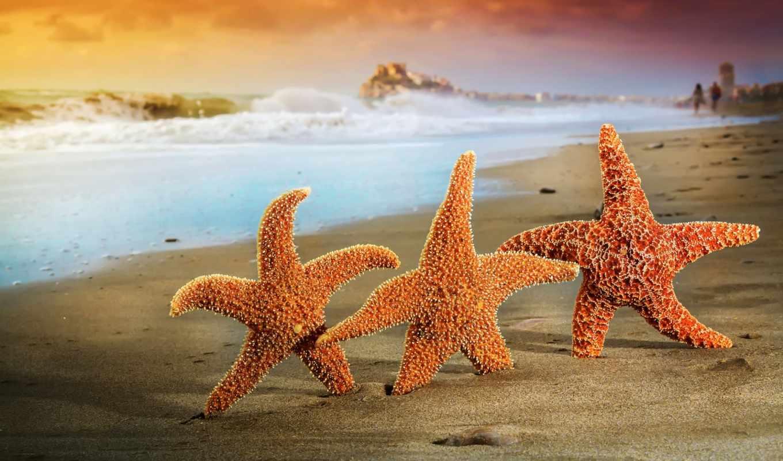 морские звёзды, пляж, море, волны