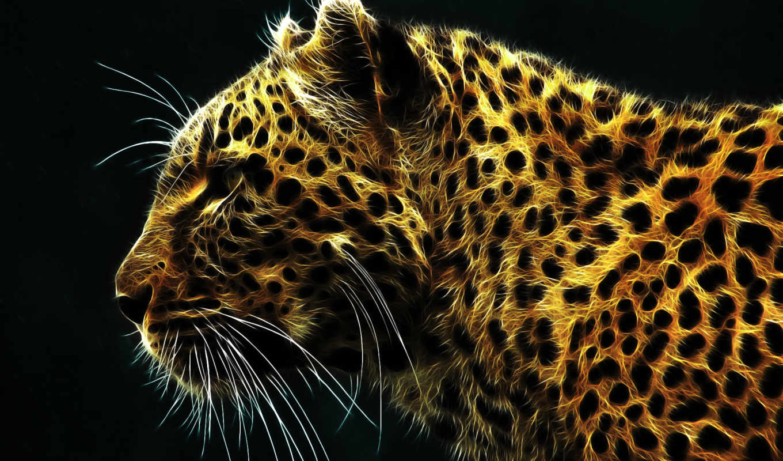 кошки, zhivotnye, графика, картинка, смотреть, ус, морда,