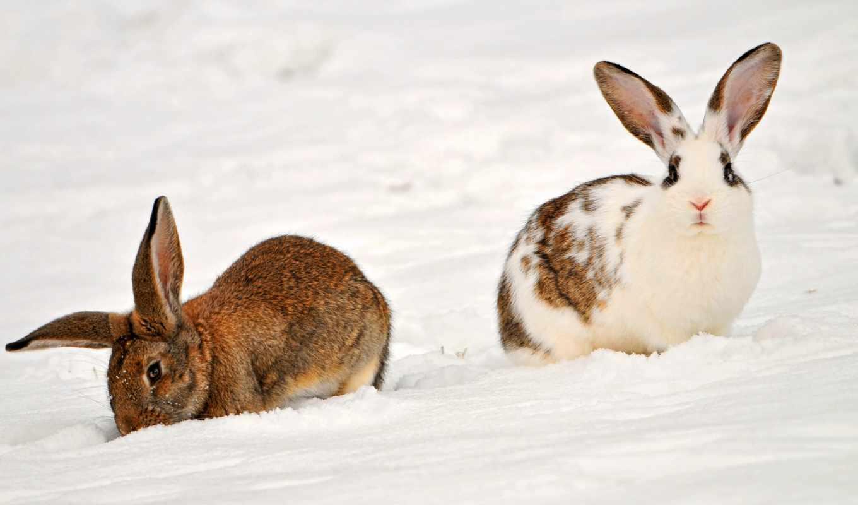 кролики, krolik, высокого, июня, сайте, zhivotnye, качества, снег, нашем, этого, нужный,