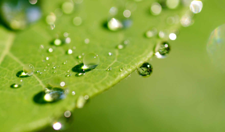 leaf, wet, макро, зелёный, со, лет,