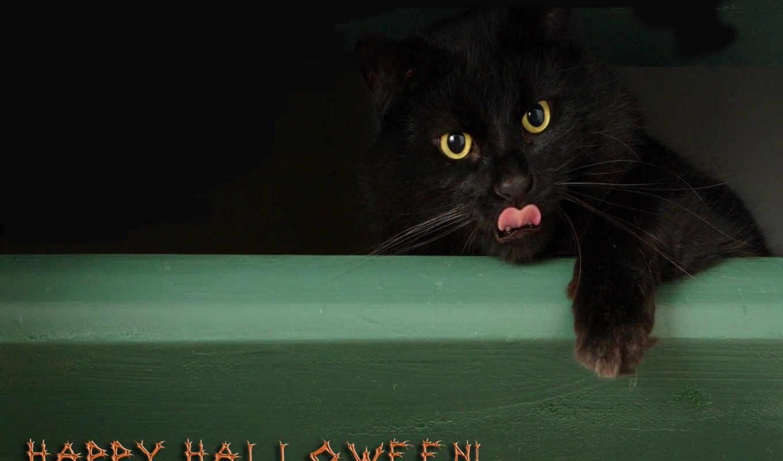 halloween, хеллоуин, desktop,