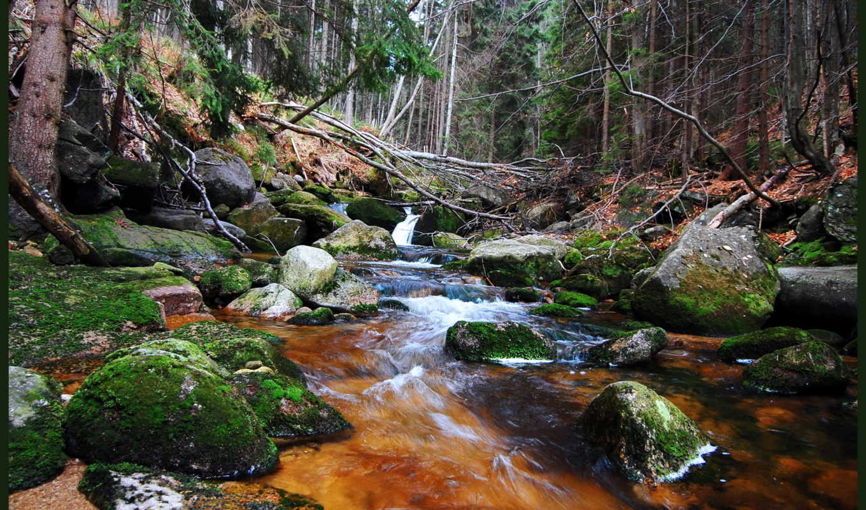 лес, ручей, природа, flowing, trees, free,