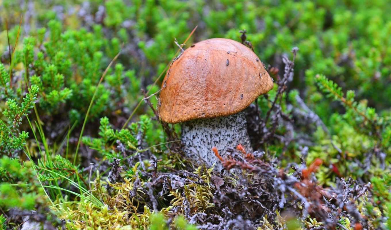 году, грибов, этом, while, resident, области, сзади, ягод, мурманской, уже,