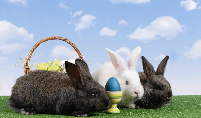 кролик, tapetum, pulpit, telefon, фото, royalty