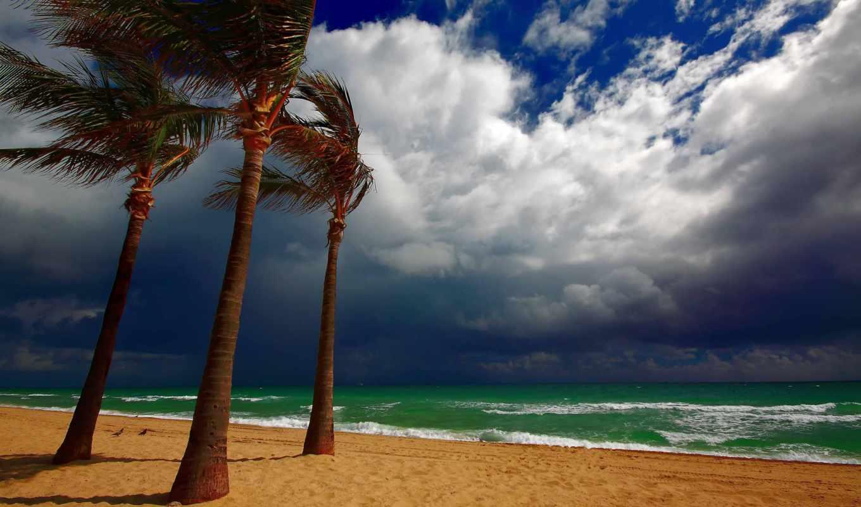 пляж, пальмы, тучи, море, пейзаж,