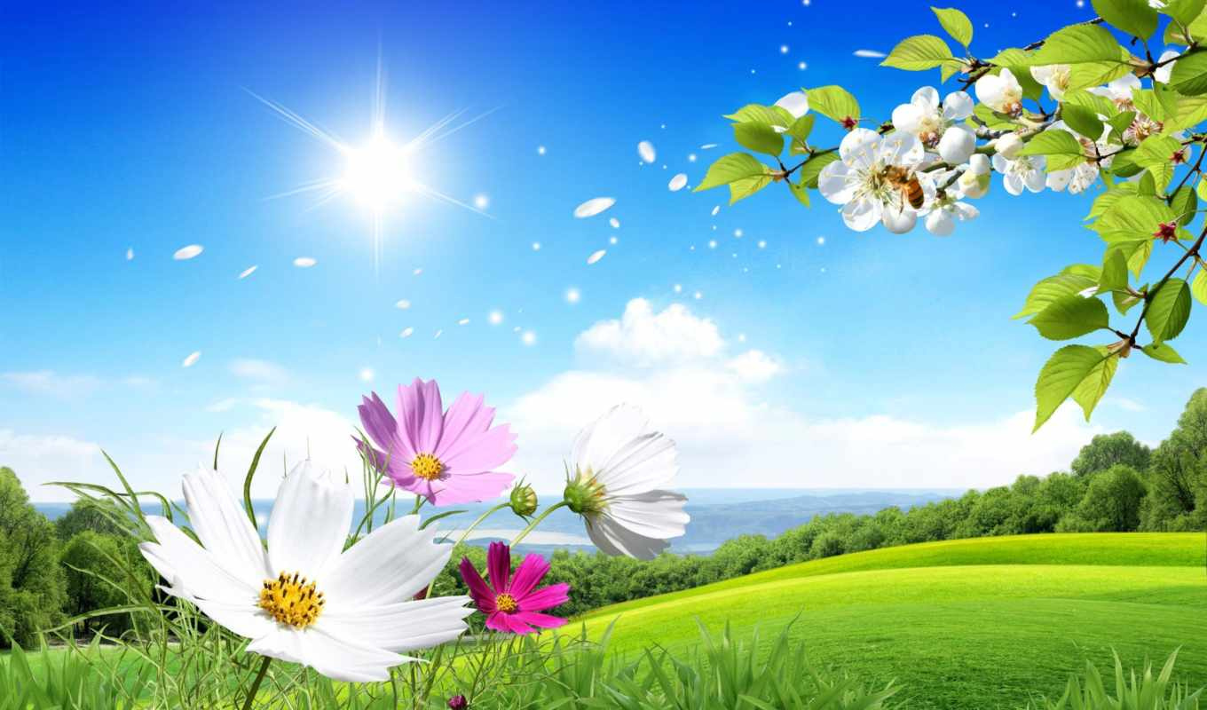 scenery, flowers, summer, images, цветы,