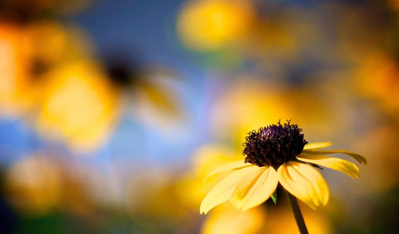 цветы, макро, flowers, petals, blume, лепестки,