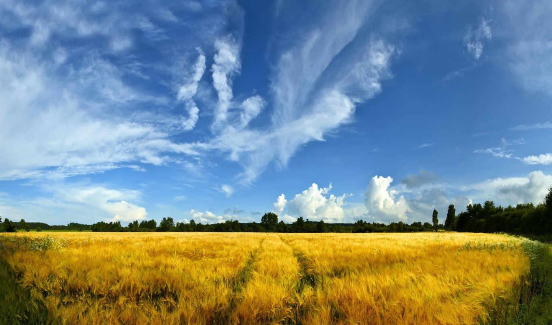 поле, поля, пейзажи -, природа, пшеница, трава, деревя,
