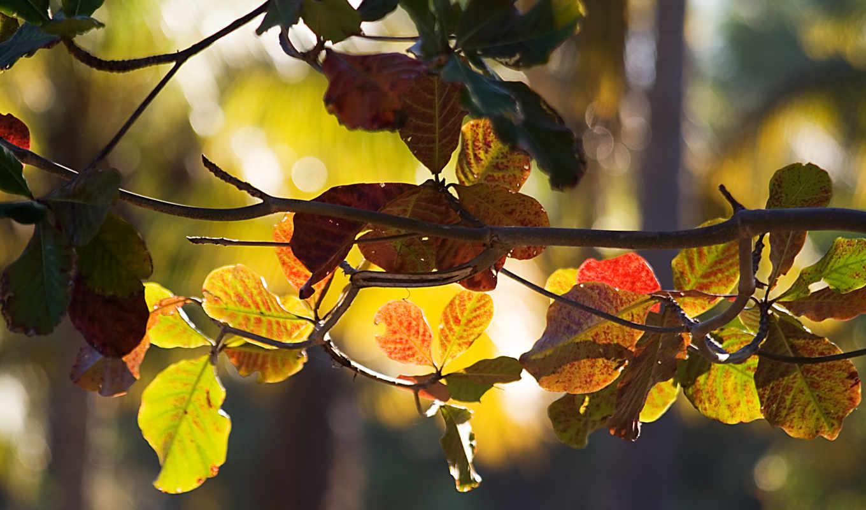 осень, bokeh, ветки, branch, почти, солнце, макро, amazing, лет, ago,