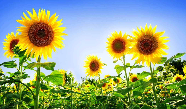hoa, hương, dụng, những, hành, của, vũ,