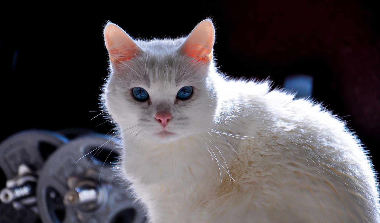 zhivotnye, cats, кошки, красивые, фотообои, кот, you,