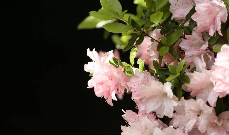 flowers, цветы, desktop, растения, красиво, image, background, природа, картинка, flori, pictures,