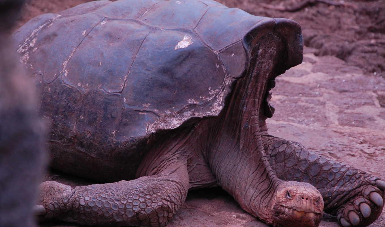 gigante, tartaruga, нояб, mais, postagem, galápagos, animais, marcadores,